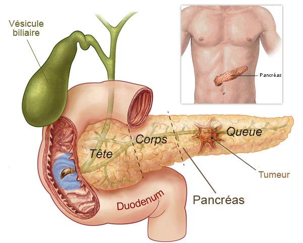 schéma du pancréas